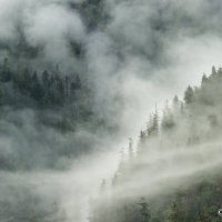 Alaska Fog
