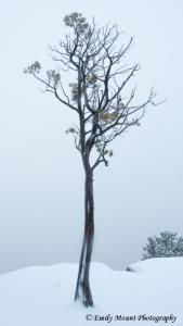 Tree Winter Canyon