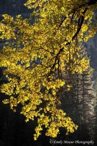 Yosemite Fall Colors
