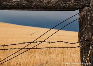 Palouse fence