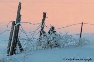 Washington Fence