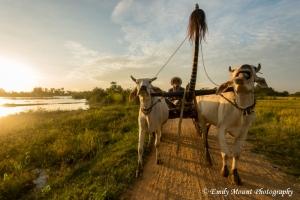 Cambodia Oxcart Sunrise