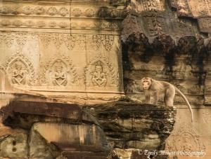 Wat Monkey